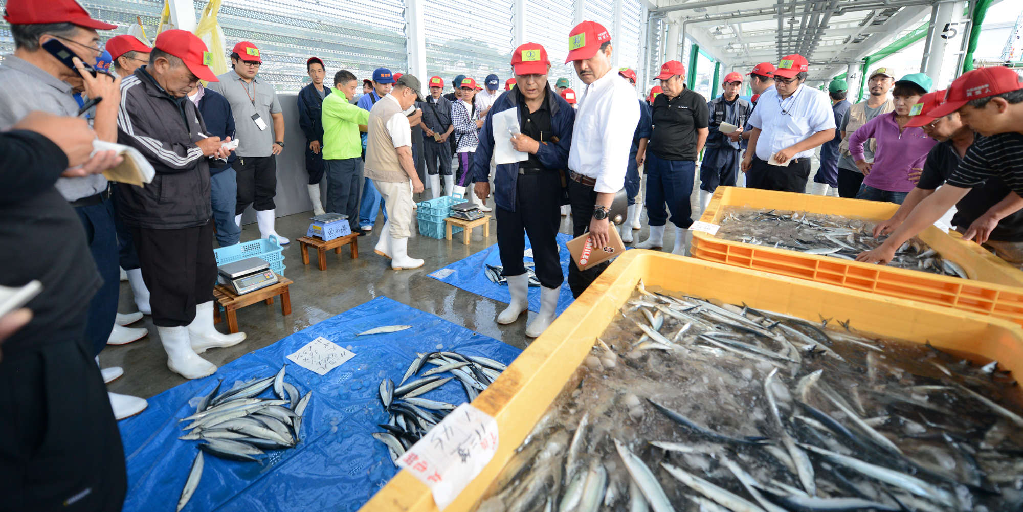 買い付け・仕入れ 新鮮な旬の魚を適性な価格で